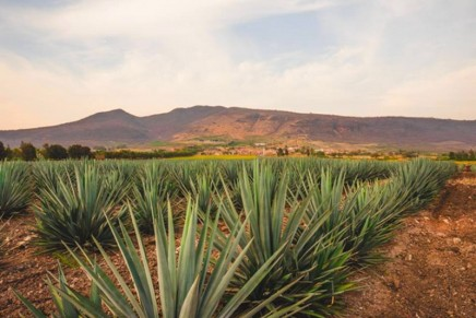 The first new addition to Patrón's core range of luxury tequilas in quarter-century