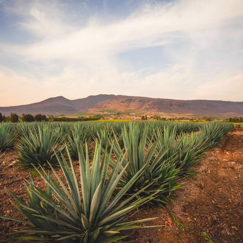 Patrón Extra Añejo is the first new addition to Patrón's core range of tequilas in quarter-century-