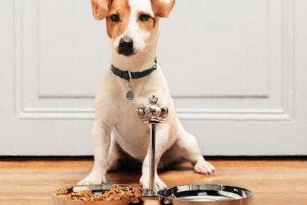 Bonjour Royal Jack! Meet Christofle first pet collection