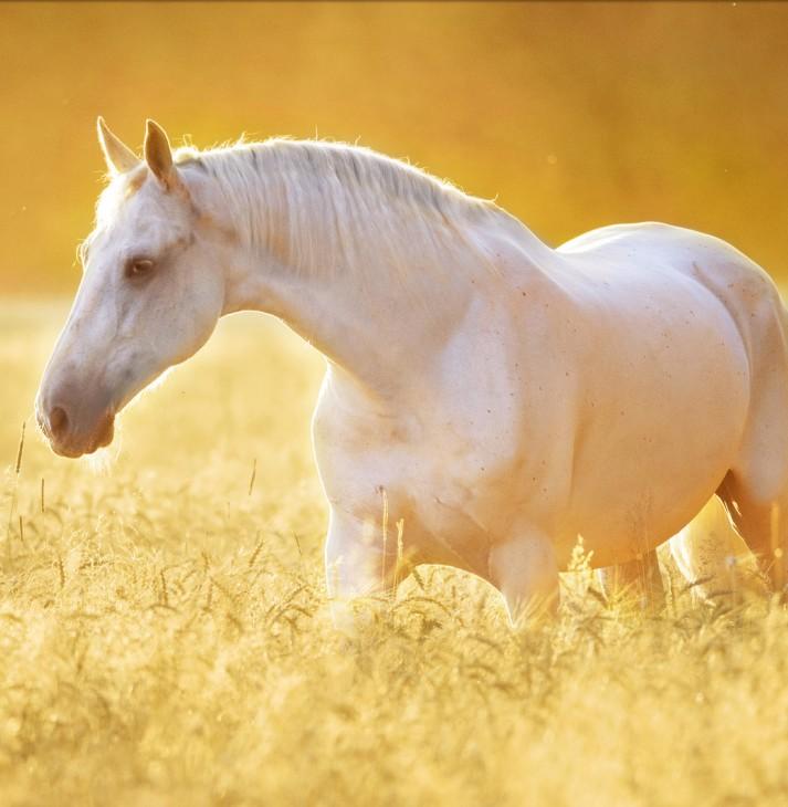 Santa Barbara, Hope Ranch, California-equestria facilities