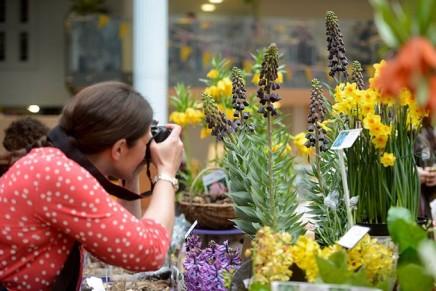 Harrods planting a Fragrance Garden @ Chelsea Flower Show