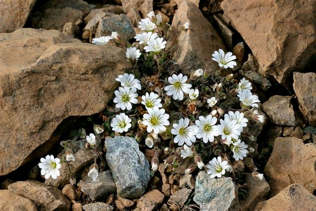 Shetland wild flowers