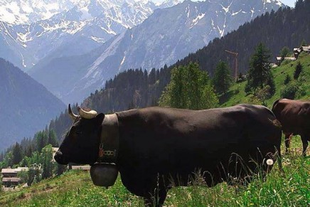 Virgin's Lodge in Verbier promises a Summer of Sustainability