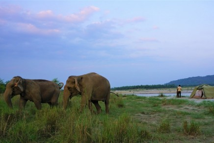 How ethical is the elephant 'sanctuary' you're visiting?