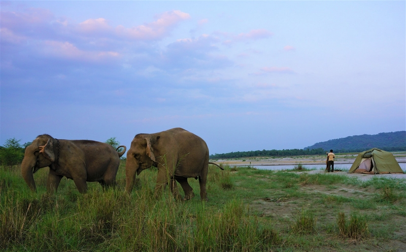 TIGER TOPS - Pioneering Environmentally Responsible Tourism