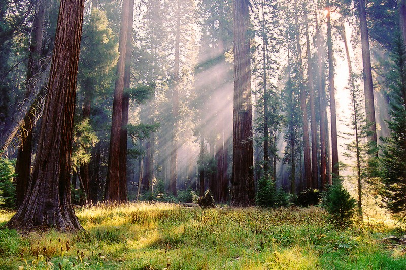 The Best Outdoor Attractions Around Yosemite National Park - Sequoia