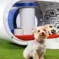 The Samsung Dream Doghouse 2015-001