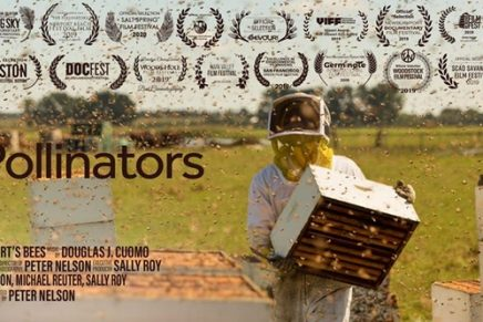 'It's only important if you eat food': inside a film on the honeybee crisis