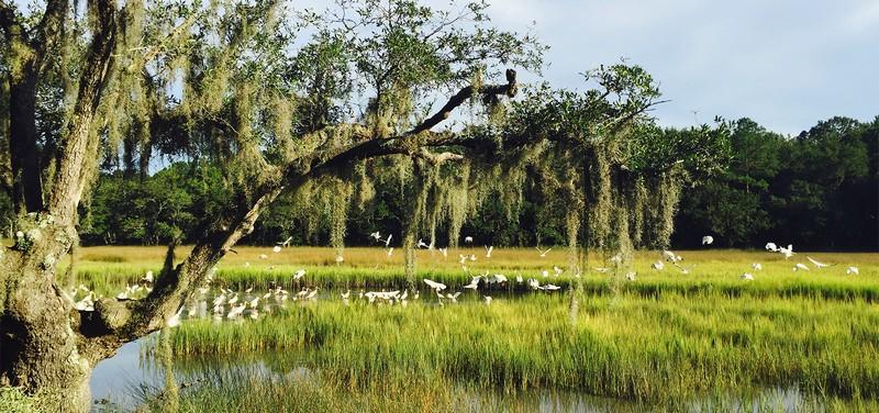 Timbers Kiawah Fauna