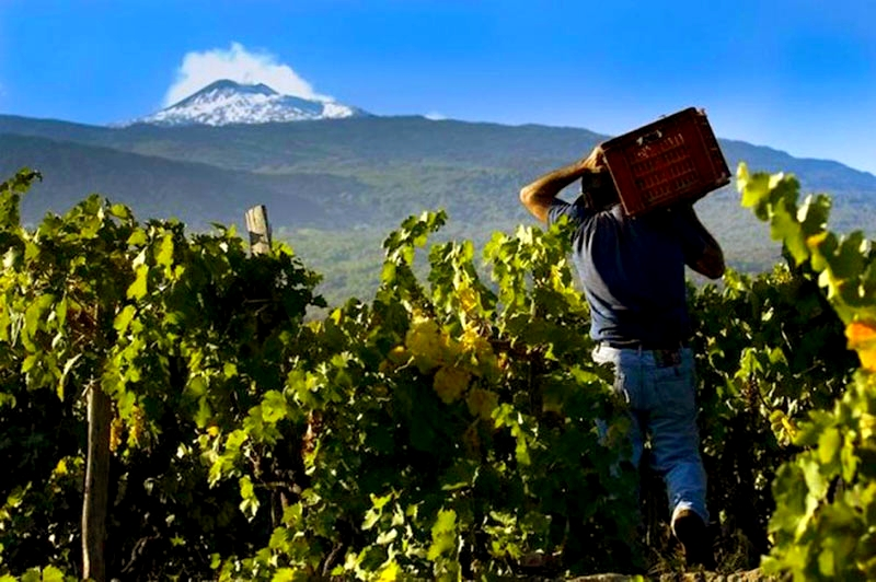 Vineyards-close-to-Etna