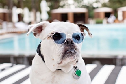 Miami Beach pet-friendly perks and places to bark about