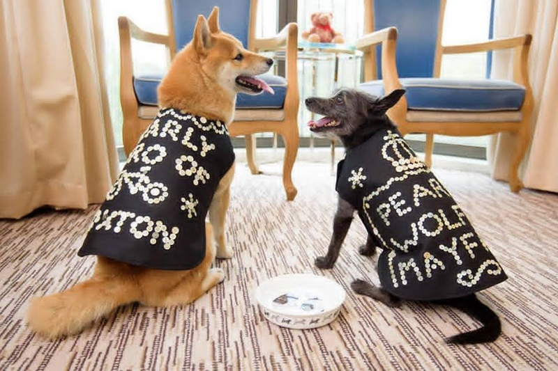 Ways to Treat Your Dog Like a Queen -2luxury2