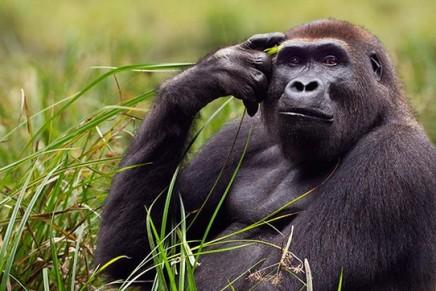 Over half of world's wild primate species face extinction, report reveals