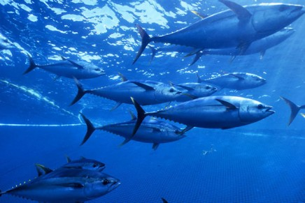 Global fish production approaching sustainable limit, UN warns