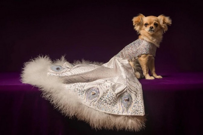 The World's Most Expensive Presents review – a ballgown for your dog, anyone?