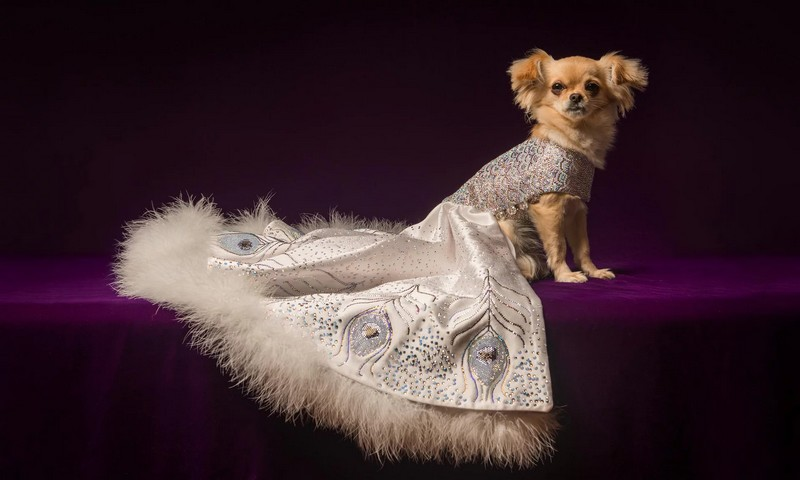 a ballgown for a dog
