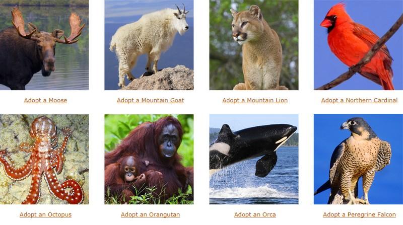 adopt a wild animal 2017