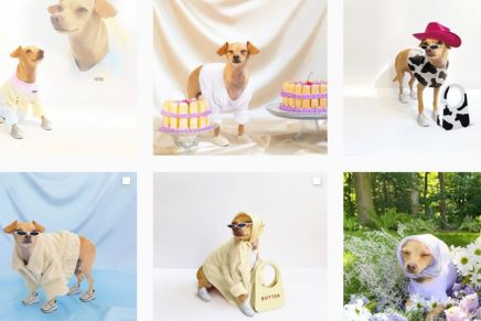 How much is that doggie (coat) in the window? The rise of pet fashion