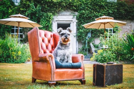 Canine comforts: five-star treats for the whole family – including the dog