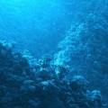 chanel-blue-serum-costa-rica