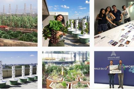 Three urban gardening solutions bringing the trend of vertical agriculture to life