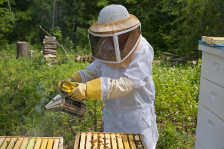 Do farmers really need bee-harming insecticides?