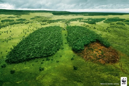 Forests are emerging out from the shadow of fossil fuels in climate debate