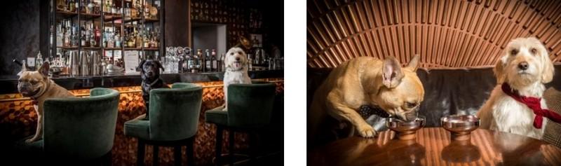dog-friendly bar smithandwhistle dot com