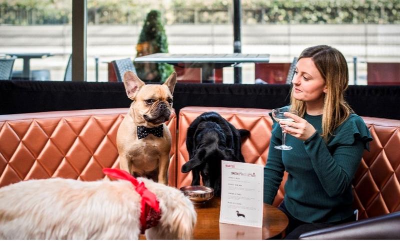 dog-friendly bar smithandwhistle