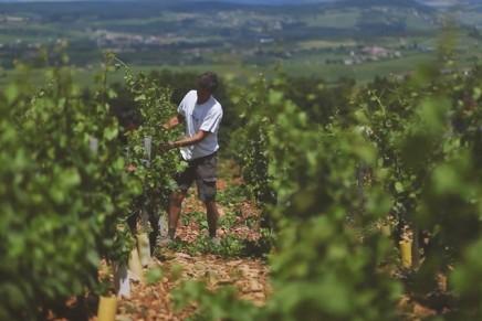It's time to explore 'suburban wine'