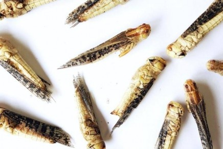 Insects tipped to rival sushi as fashionable food of the future