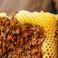 fairmont bees program