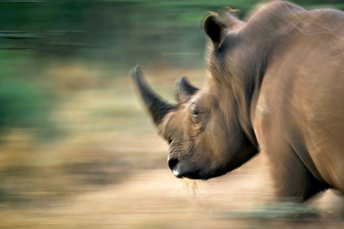 What drives the demand for rhino horns?