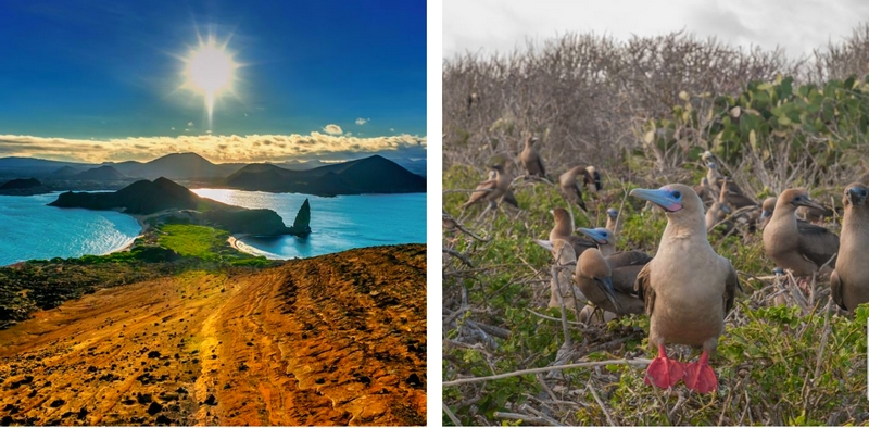 galapagos flora and fauna - cruise tours