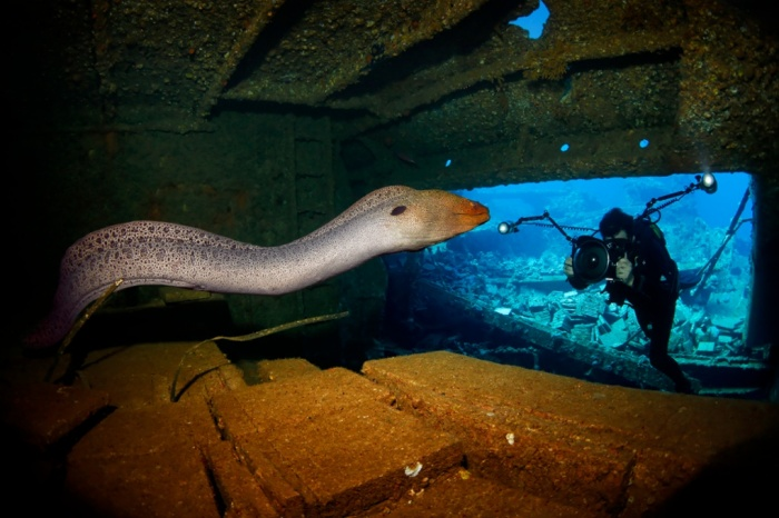 giant moray eel taken inside the wreck of the Chrisoula K in the ...