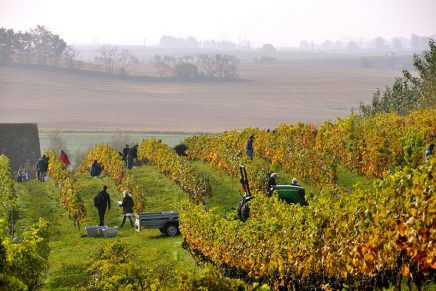 Why European wines are still number one