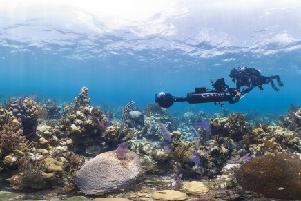Oceans are world's seventh largest economy worth $24tn, says WWF report