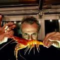 massimo-bottura-wow-shirimps