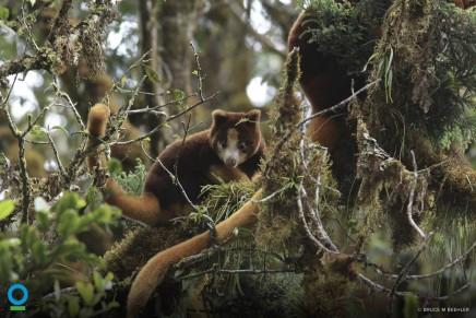 Global biodiversity targets won't be met by 2020, scientists say