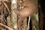 China hopes to take rare animals off the menu with tough jail sentences