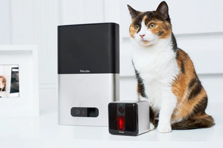 Six of the best gadgets for cats: goodbye analogue mog, hello cyber hepcat