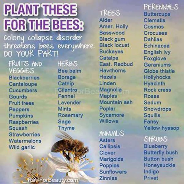 plant bees-