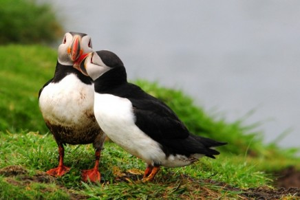 Green news roundup: Extreme heatwaves, the cooling problem and puffins in peril