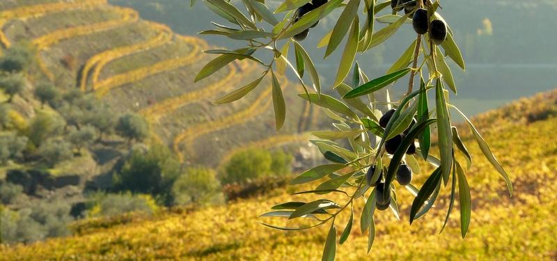 quintadocrasto wine & olive