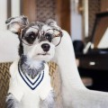remixthedog-relaxing-in-suite-style-at-the-surrey