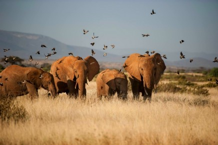 Good news for elephants: China's legal ivory trade is 'dying' as prices fall
