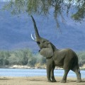 srilankaelephants