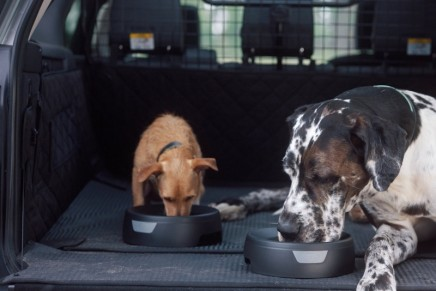 Social Training before Travelling with your Dog