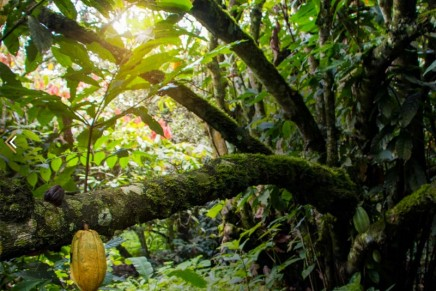 Stay on the Ecuador farm that produces the world's most expensive chocolate