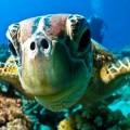 underwater observation